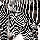 Stripes by zzsuzsa