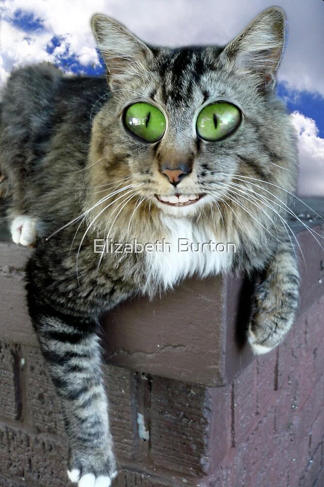 Quot Cat On Crack Quot By Elizabeth Burton Redbubble