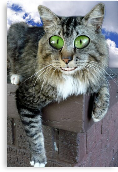 Cat On Crack by Elizabeth Burton