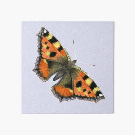 Tortoiseshell Butterfly Watercolor Painting Wildlife Artwork Art Board Print