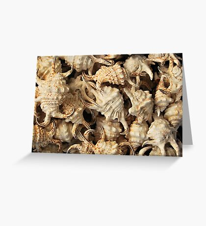 Spider conch shells Greeting Card