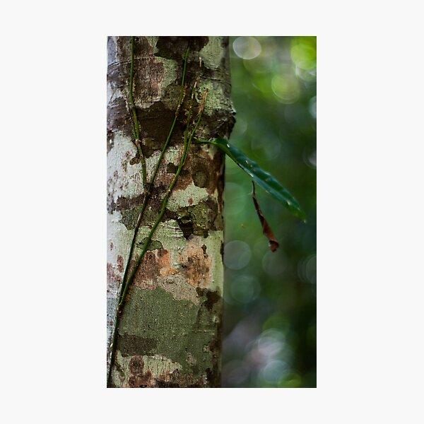 Lichen - Patterns & Colours Photographic Print