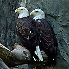 Feathered Friends by Edward J. Laquale