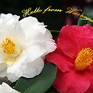 Camellia Varieties - Warragul Victoria by Bev Pascoe