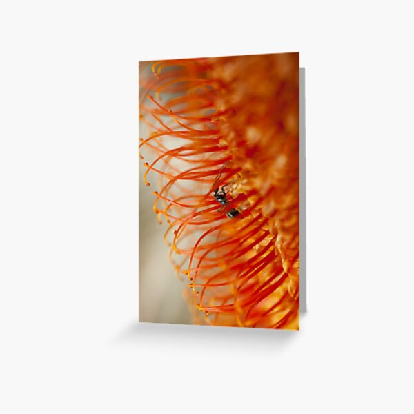 Ant on a Banksia Greeting Card