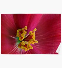 Begonia Abstract Poster
