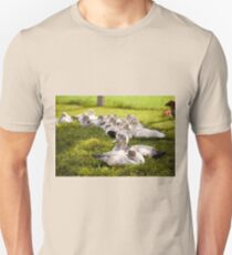 Muscovy Duck farm birds group T-Shirt