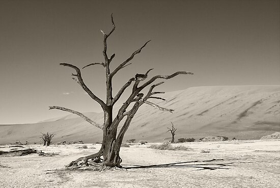 Dry As a Bone by Scott Carr