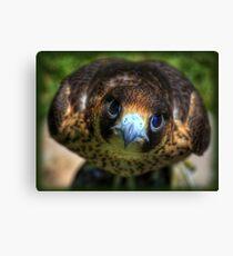 Barbary Falcon Canvas Print
