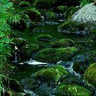 Northern Stream by Richard Burton