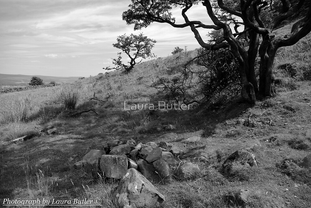 On Slemish, St. Patrick's Mountain by Laura Butler