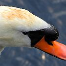 My Swan Song by hardhhhat