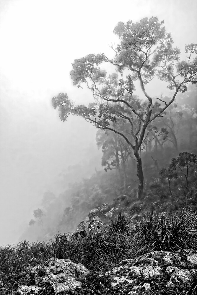 Mist over Hanging Rock by Tony Steinberg