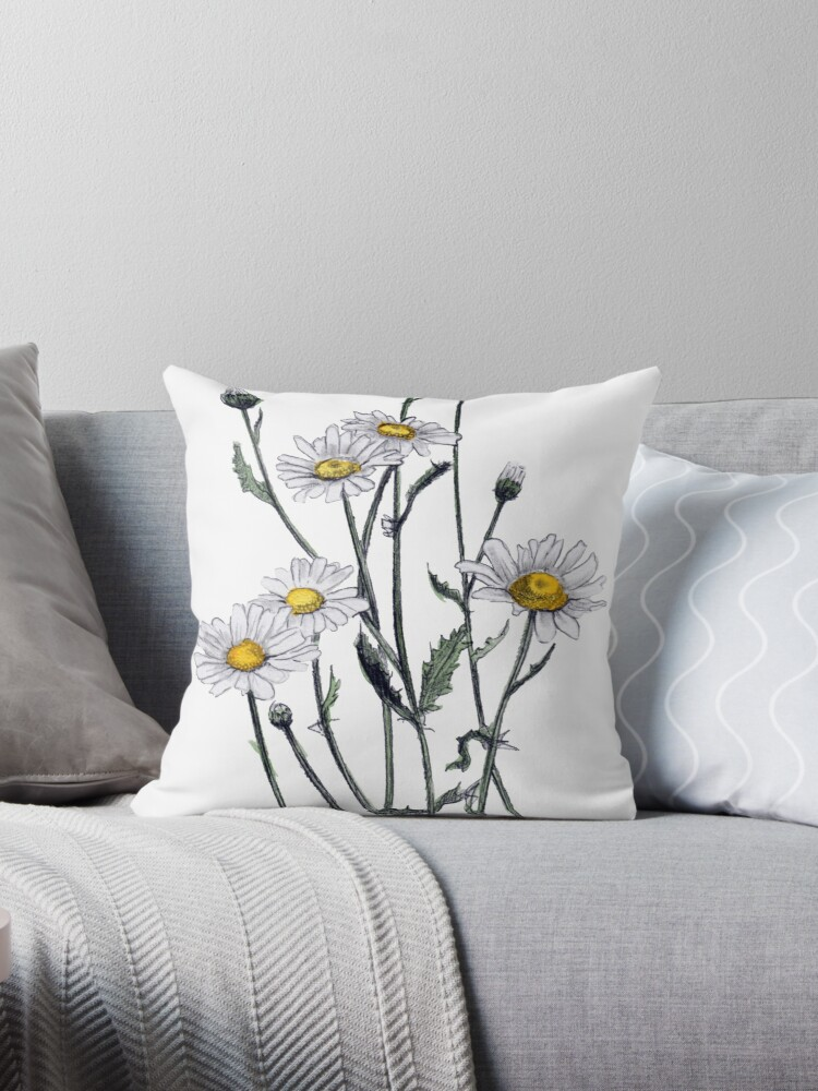 Oxeye daisy by Angie Thompson
