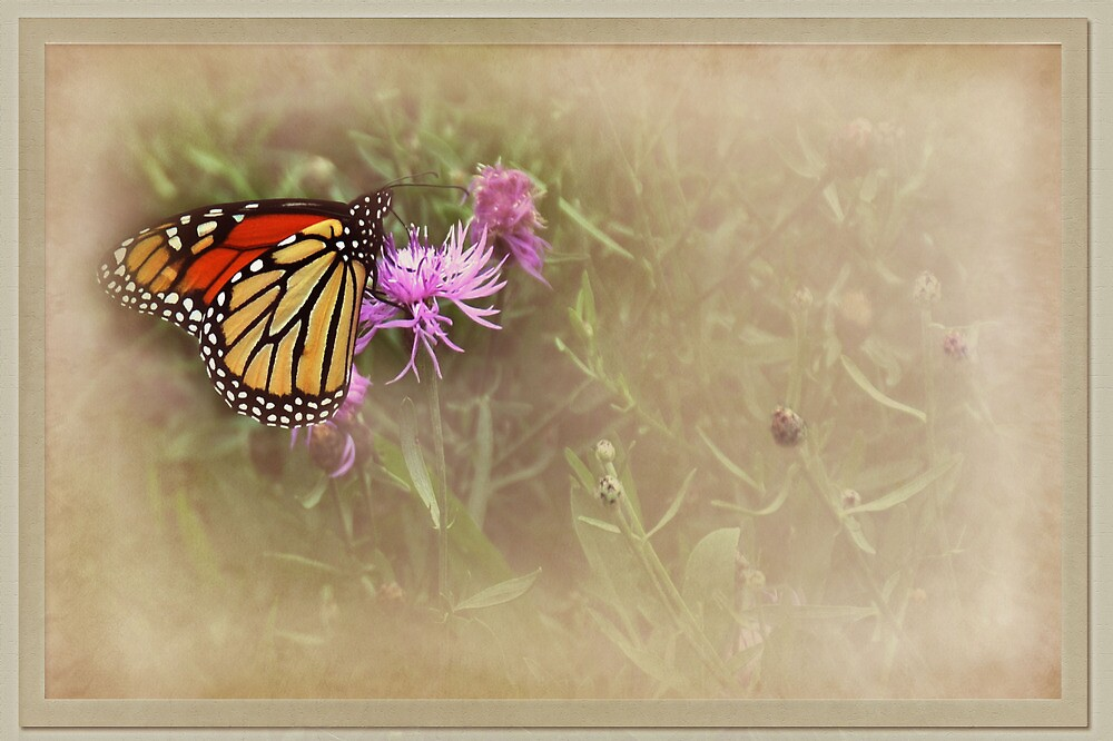 Monarch by jules572