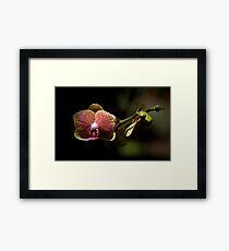 Leu Gardens Orchid Framed Print