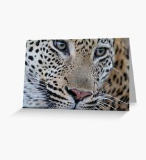 Leopard - Mxabene Male Greeting Card