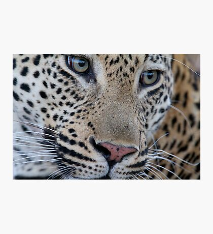Leopard - Mxabene Male Photographic Print