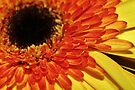 Burst of Sunshine by Astrid Ewing Photography