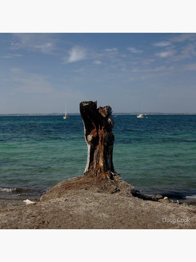 Stump by DougCook