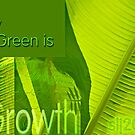 Growth by budrfli