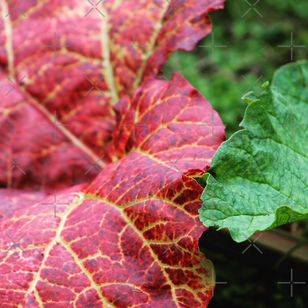 Autumn leaves by Jonesyinc