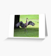 Sandhill Crane Cape Dancer Greeting Card
