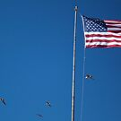 Pelicans Around the Flag by Renee D. Miranda