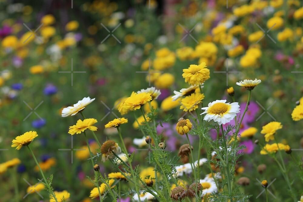 Field of flowers by Jonesyinc