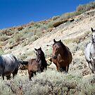 Wild Blue Roan Stallion - Family Portrait by A.M. Ruttle