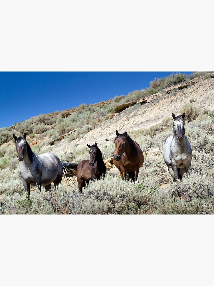 Wild Blue Roan Stallion - Family Portrait by annruttle