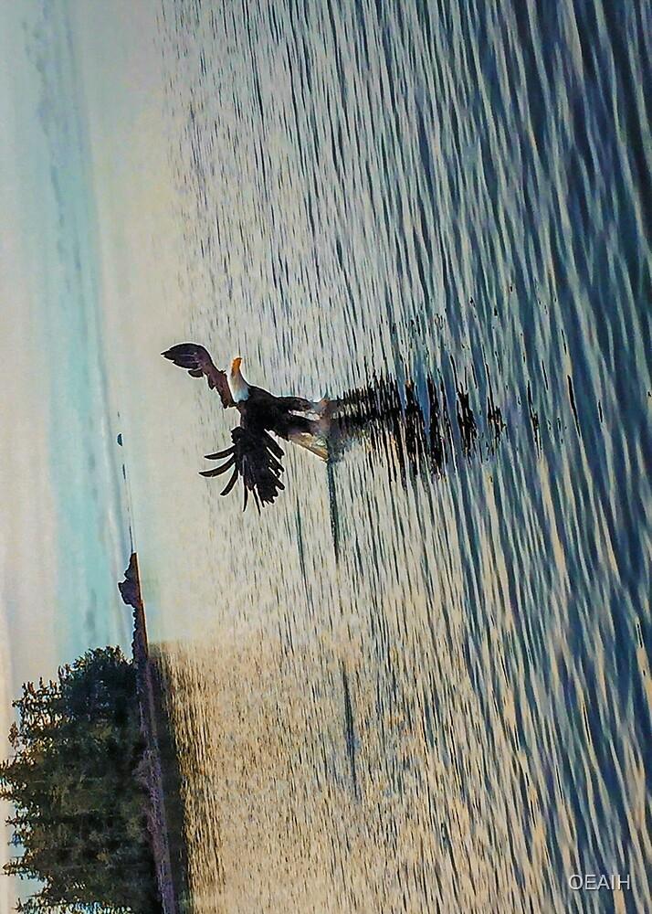 Eagle grabbing fish by OEAIH