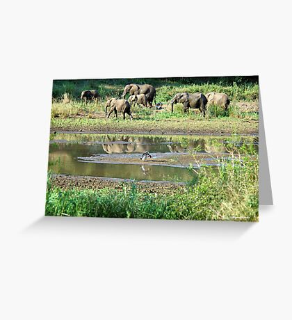 WILDERNESS MAGICAL MOMENTS - The Kruger National Park  Greeting Card