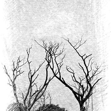 Trees  during winter by VeenaNair23