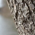 Bark of a tree by AriaTees