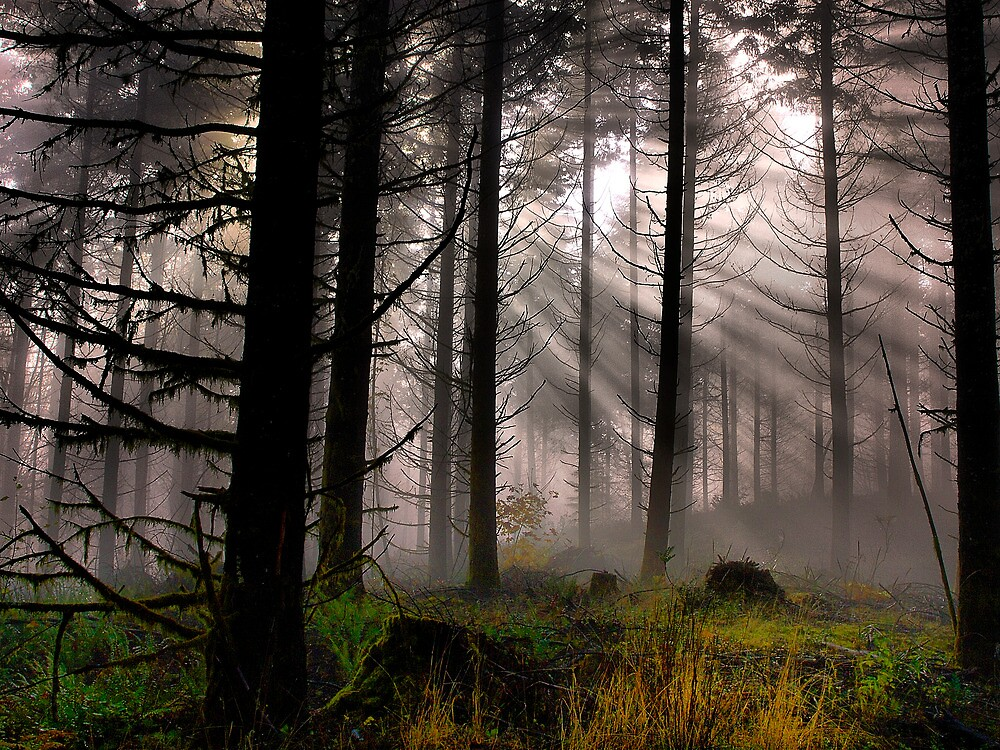 Let The Light in by Charles & Patricia   Harkins ~ Picture Oregon
