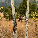 Beautiful Horse Through The Aspen Trees Trunks by Bo Insogna