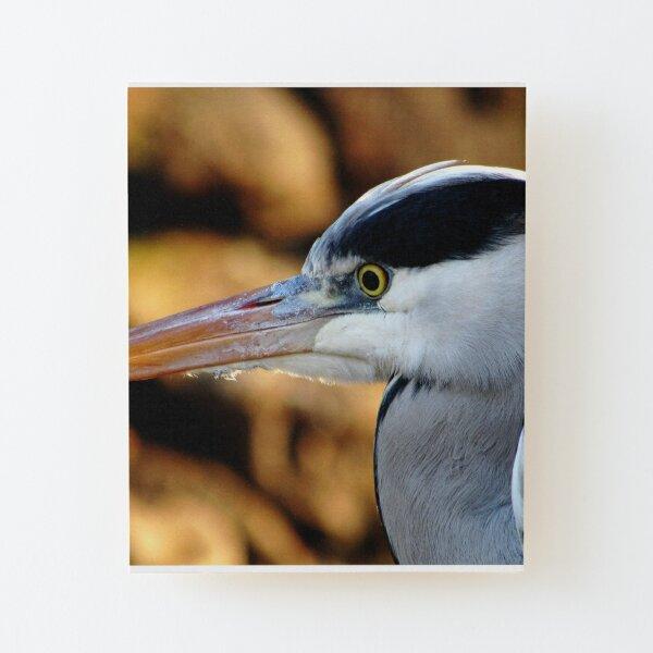 vogel Aufgezogener Druck auf Holz