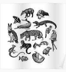 Biodiversité de l'Amazonie Poster