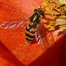 Sipping Nectar..Gathering Pollen by MaeBelle