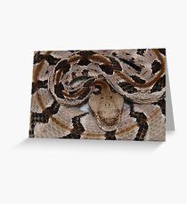 Ready To Strike,  Tember Rattle Snake! Greeting Card