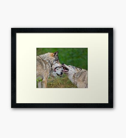 Who's Watching? Framed Print