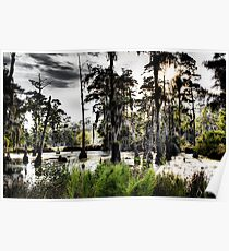 Sam Houston Swamp-2 Poster