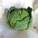 Savoy Cabbage by BizziLizzy