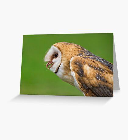 Barn owl profile Greeting Card