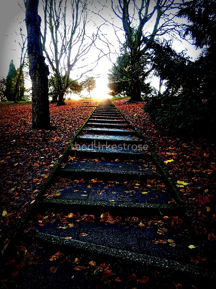 Autumn Path by thed4rkestrose