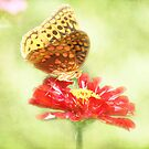 Aphrodite Butterfly on Zinnia by Linda Trine