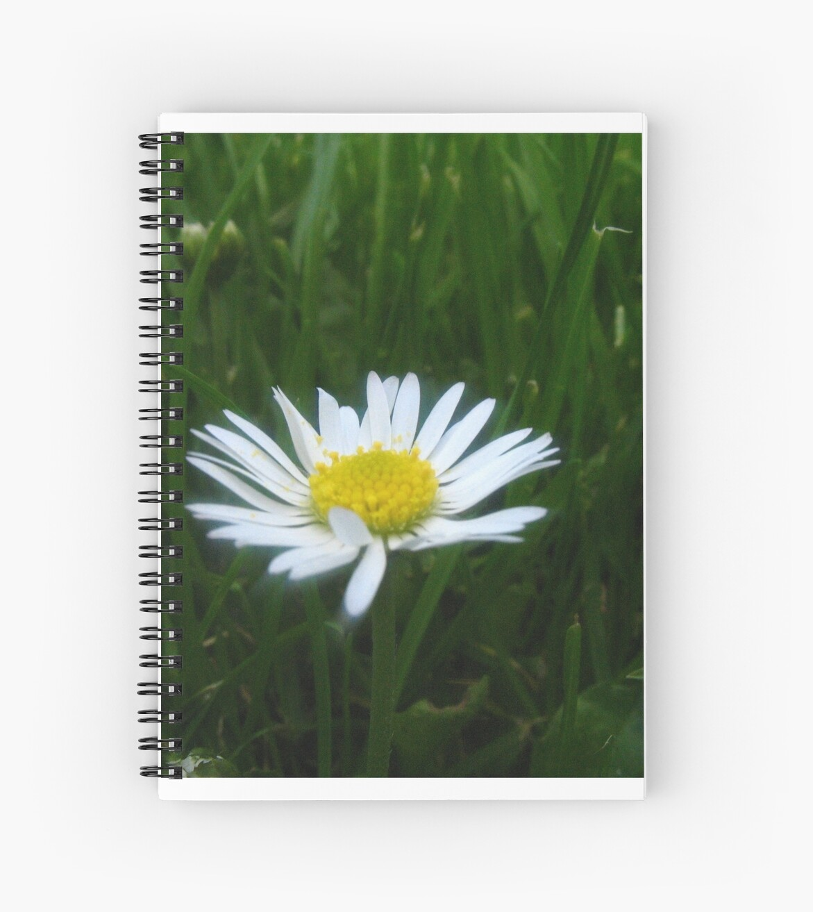 Daisy by James Searle