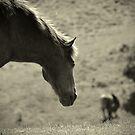 Wistful... by ElsieBell