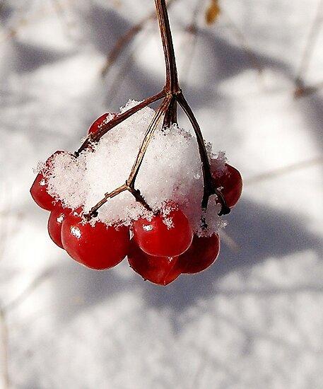 American Cranberries in Snow by Kathilee
